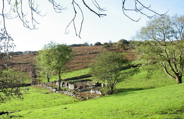 Ruined homestead in Cwm Bach