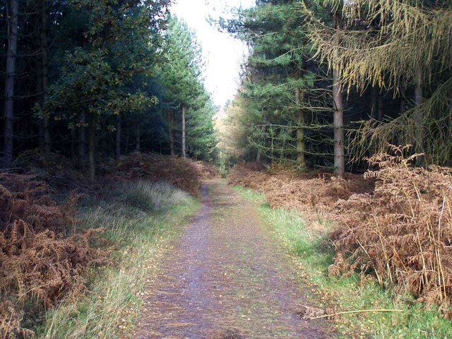 Rainbow Hill, Cannock Chase