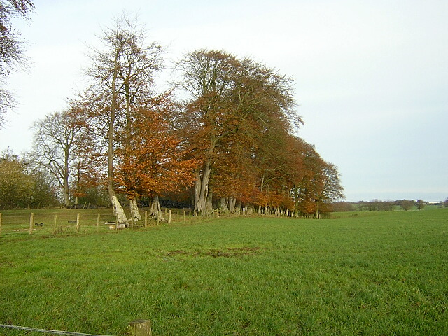 Small Wood Near Park Farm