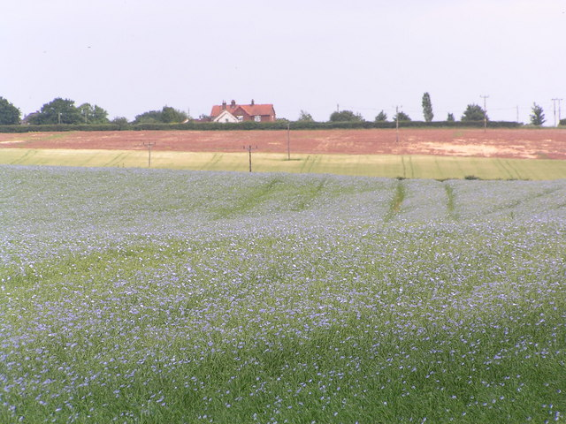 Field of Flax