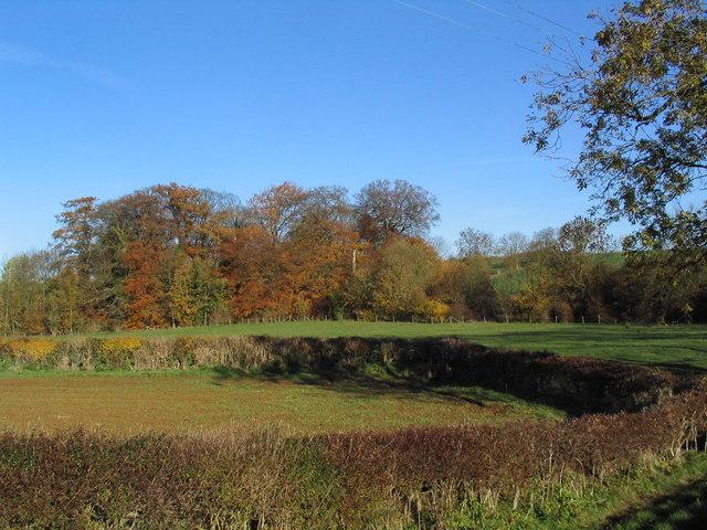 Autumn colours from Easton Lane