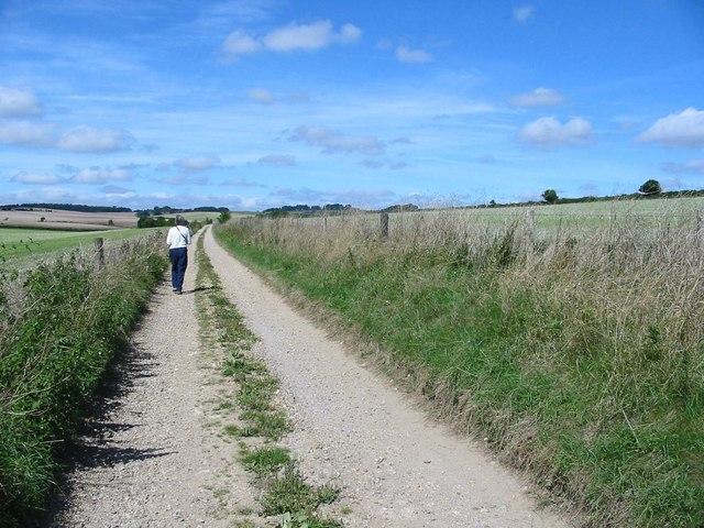 Track at Boveridge Dorset