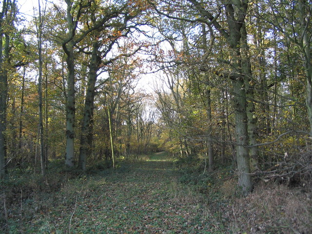 Track in Sleight's Wood