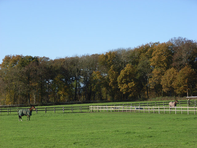Horses, Bentley