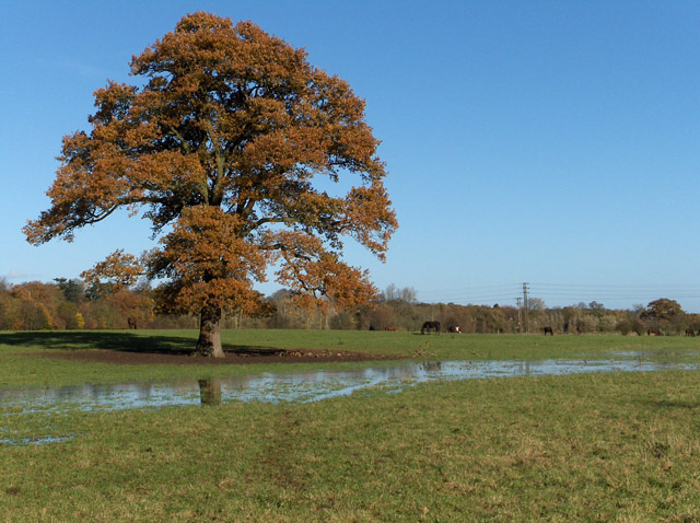 Pastures beside the River Wey