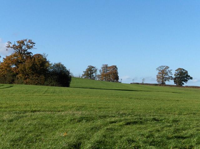 Farmland, Dora's Green