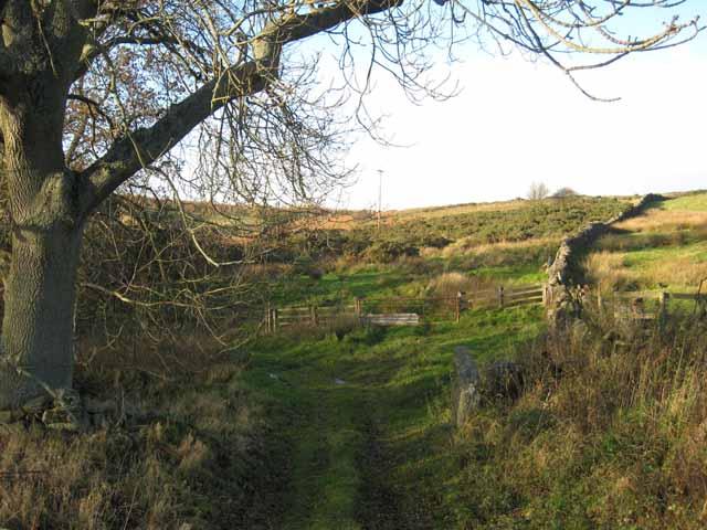 Rough grazing near Winnowshill Farm