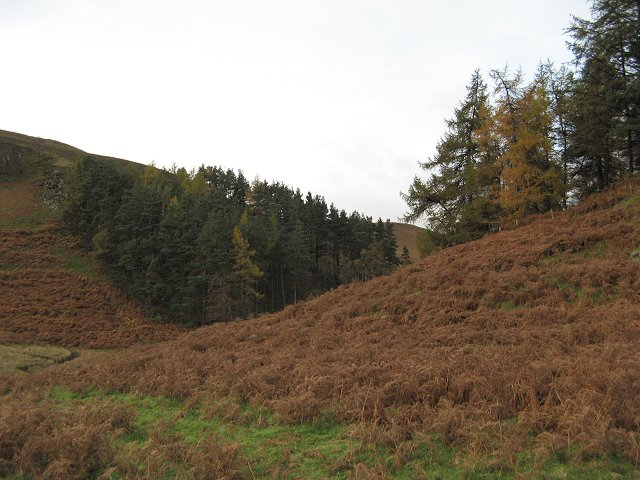 Bracken infestation.