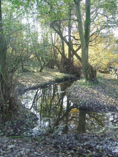 Brook in woodland near Moseley Court