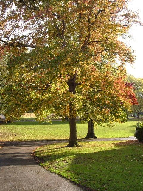 Belmont Park, Exeter