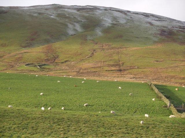 Wall and sheepfold, White law.