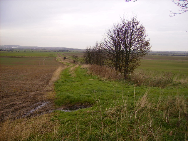 Field margin track east of Folkton Manor