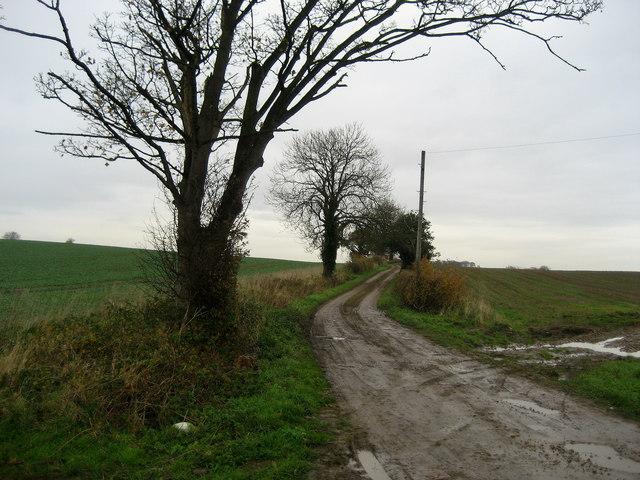 Bogs Lane