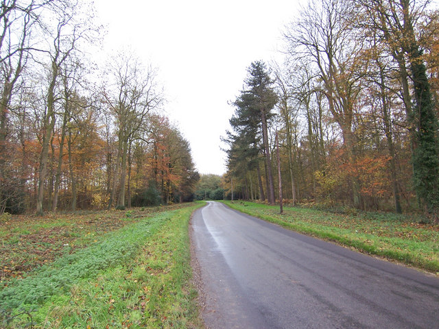 The Road through Hendale Woods