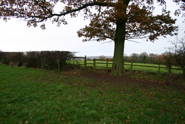 A Tree With Stile!