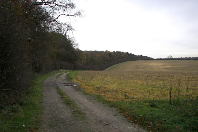 The Edge of Halliday Hill Wood