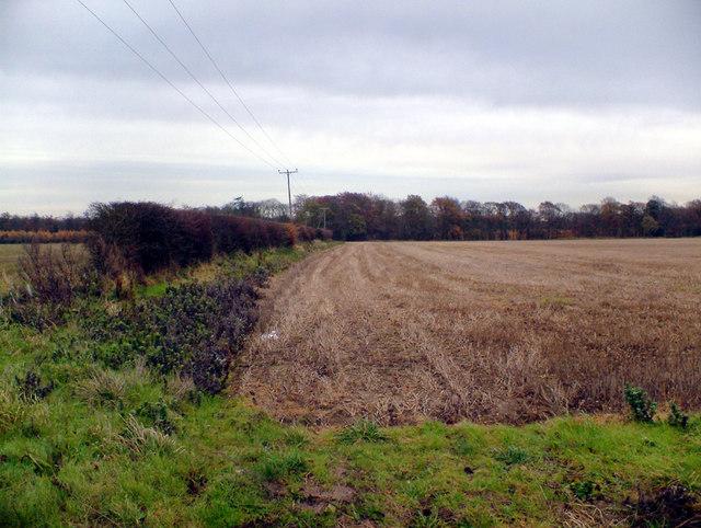 Near Brompton Dale
