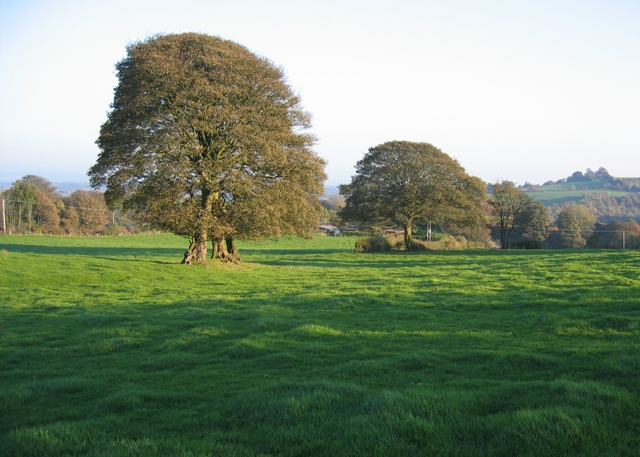 Trees and Field