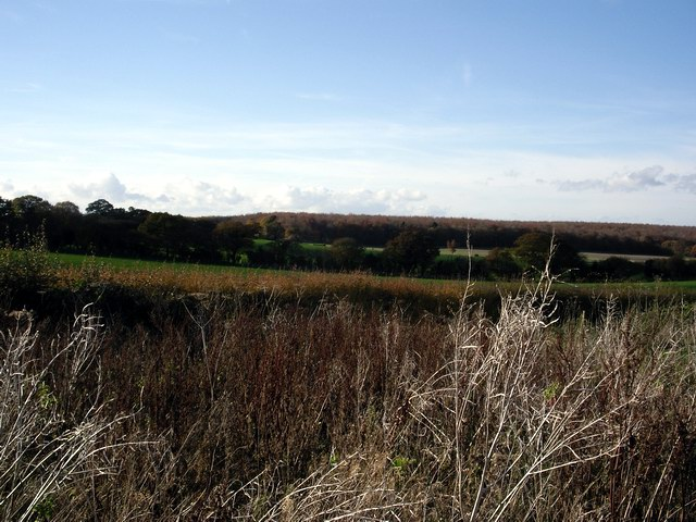 Countryside view from Oxdrove Way