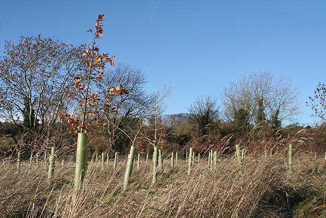 Southstoke: Millennium Wood