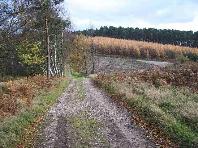 Rawnsley Hills, Cannock Chase