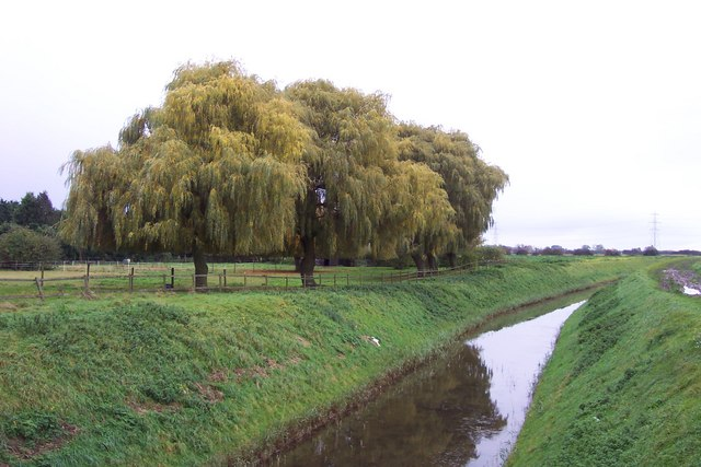 Fine willows by the Smeeth Lode near Trafford House
