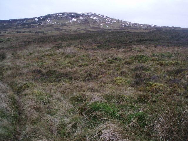 Grass and Heather Hillside