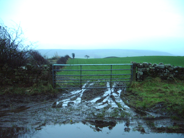 Muddy gateway, to a field of winter barley