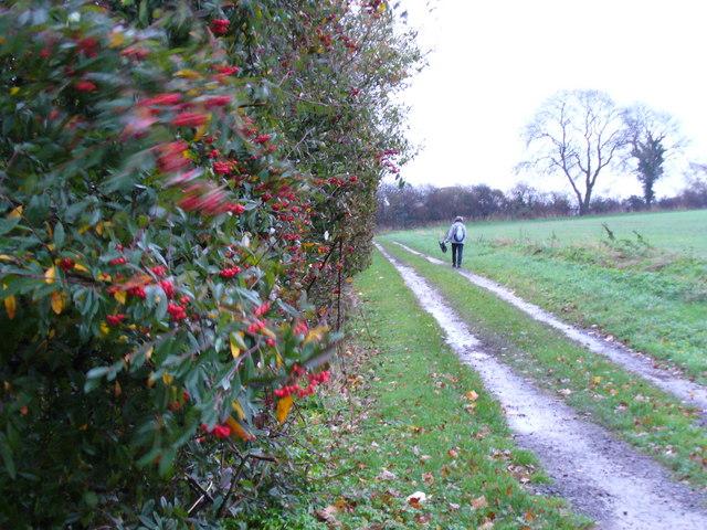 Bridleway at Breach Farm