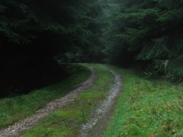 Forest Track in Raydale.