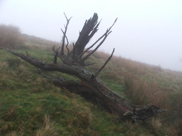 Dead Tree on the Hillside.