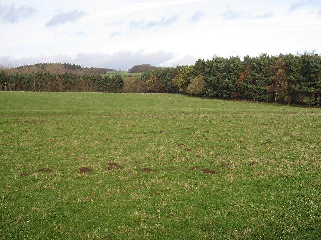 A Field By Black Plantation