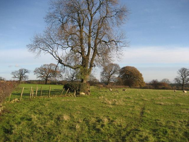 Fields between Grantley and Low Grantley