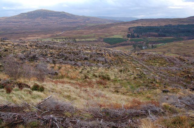 Forestry in Glen Varragill
