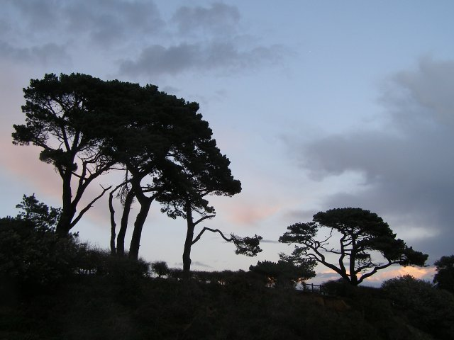 Trees at Lepe Country Park