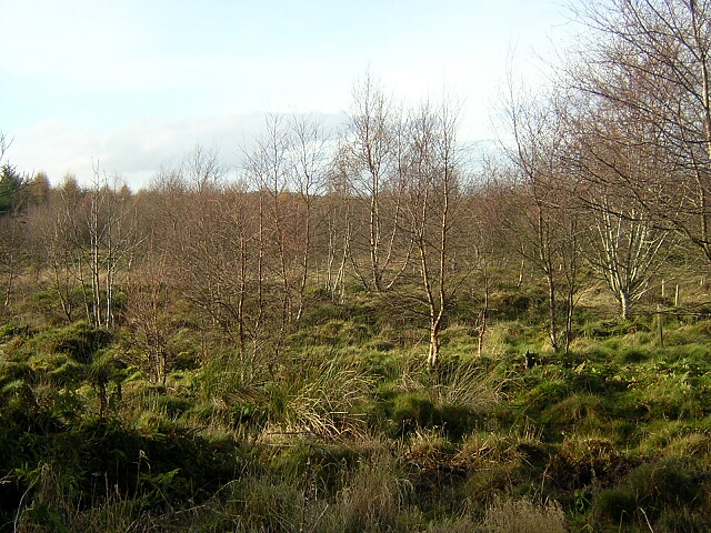 Happendon Wood