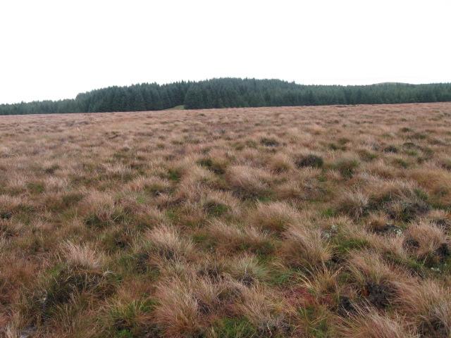 Moorland below Doughnot Hill