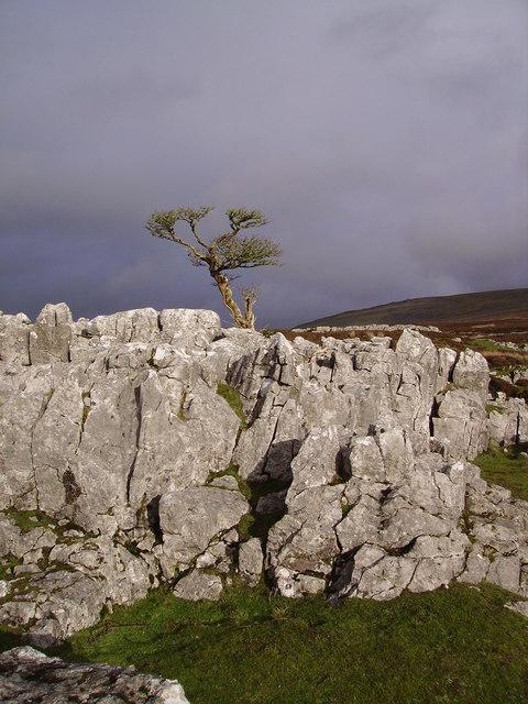 Limestone Outcrop, Leck Fell