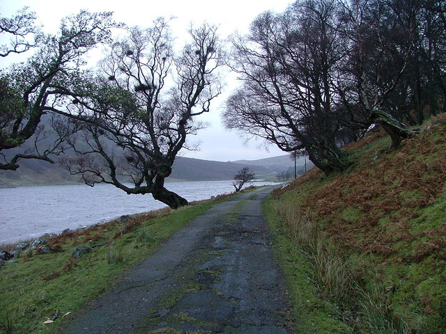 Road and Trees by Loch Killin