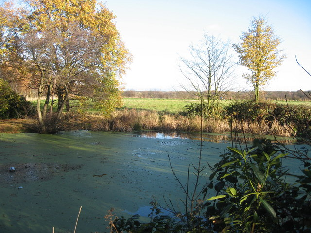 Pond, Croxteth Country Park