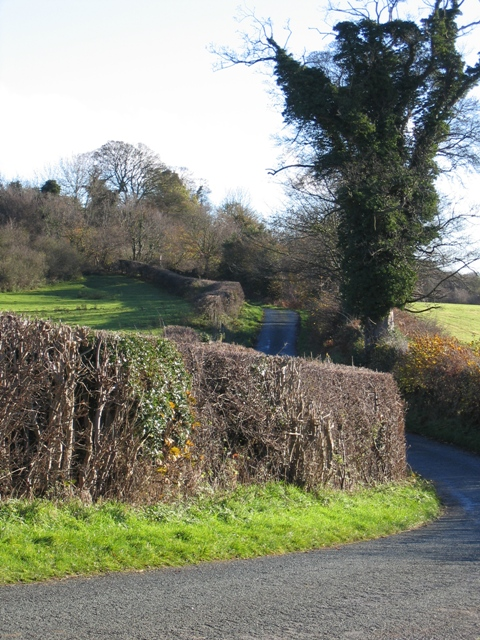 Country Lane near Bryn-yr-eithin