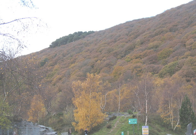 Autumn in Coed Chwaral