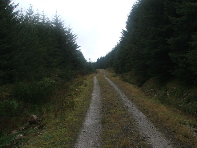 Forestry Track on West Moor.