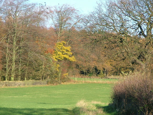 Deffer Wood from the footpath from Spring House Farm