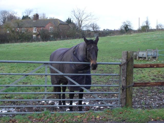 Horse in paddock opposite Manor Farm, 6d Handley