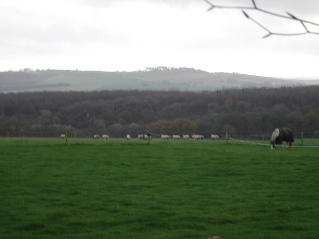 Animals grazing on Lodge Farm