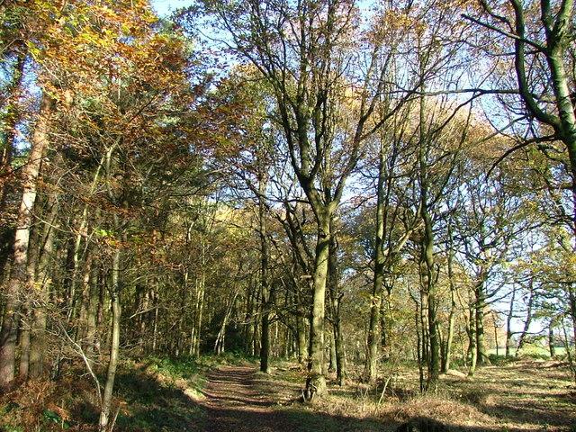Deffer Wood