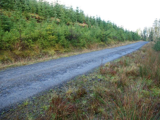 Forest road in Kilmichael Forest