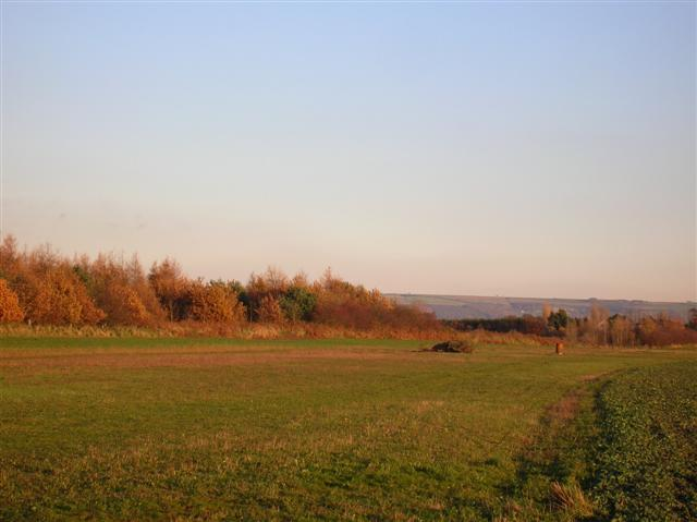 Plantation near Hendwick Hall farm