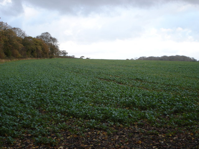 Farmland north of Ox Drove, towards Knighton Hill